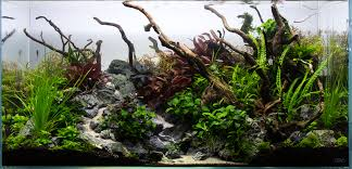 Aquascape Environmental Big Aquascapes Google Search Fish Tanks Pinterest