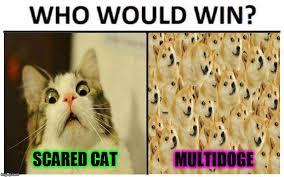 Scared Cat Meme - scared cat multidoge