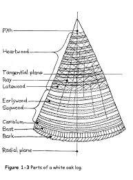 White Oak Tree Bark Selecting A White Oak Tree For Basketry National Basketry