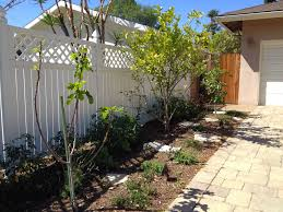 Backyard Fruit Trees Front Yard Fruit Trees Spring Blossoms How Does My Garden Grow