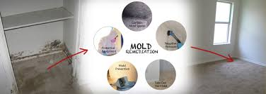 mold remediation and removal in southwest montana