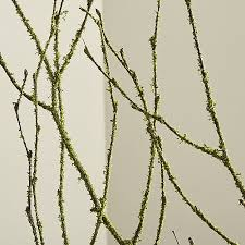 Moss Coated Birch Branches