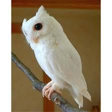 owl home decor white owl home decor home decor website mindfulsodexo