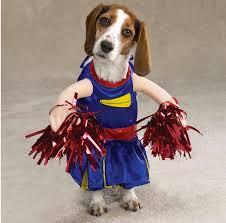 Halloween Costumes Dead Cheerleader Halloween Confessions University Cheerleader