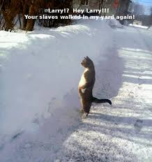 Cat Cocaine Meme - funny pictures of cats in snow impremedia net