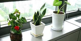 Small Desk Plants Small Plants For Office Desk Floor Ceiling Windows Light No