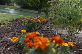 Winter Garden Drivers License Details In The Mulch Replenish Now To Prevent Freezing In The