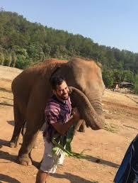 dumbo elephant spa picture dumbo elephant spa chiang mai