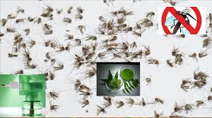 how to make mosquito repellent at home homemade mosquito