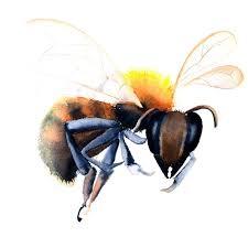 25 trending honey bee drawing ideas on pinterest bee drawing