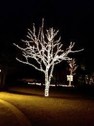 Led Lights For Outdoor Trees Rockwall Lights Light Installation In Rockwall
