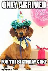 Birthday Cake Dog Meme - birthday cake dog meme 28 images 59 best images about dog cake
