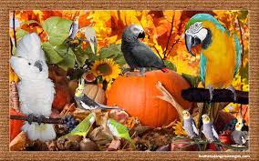 relish tray ideas for thanksgiving how to stuff your parrot on thanksgiving feathered angels