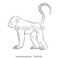 baboon black drawing stock images royalty free images u0026 vectors
