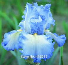 popular tall blue flowers buy cheap tall blue flowers lots from
