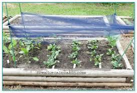 shade cloth for garden plants