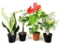 apartment plants apartment plants archives apartment gardening
