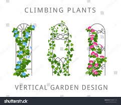 vector flat illustration garden trellis climbing stock vector