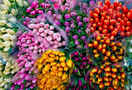 flowers in bulk wholesale wedding flowers buy bulk flowers blaine florist