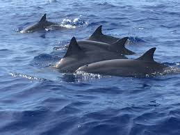 lanai pictures maui hawaii snorkeling sailing private charters whale watching