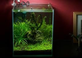 membuat aquascape bening cara membersihkan kaca aquarium atagaleri net
