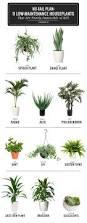 chindo viburnum easy care plants beautiful low maintenance