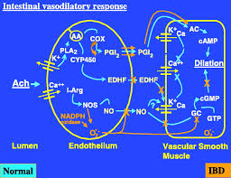 the vascular contribution in the pathogenesis of inflammatory