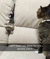 Cute Funny Animal Memes - funny pictures cat stuff pinterest funny pictures cat and