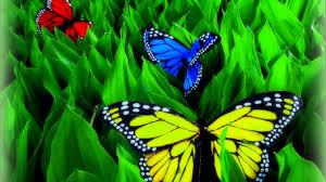 butterflies landing butterfly blue wings satin backgrounds hd 16