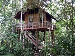 three house amongst toucans monkeys sloths and more at the tree house