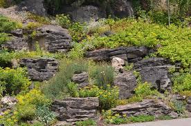 famous cactus garden ideas photos garden and landscape ideas