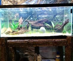 native aquarium plants top 5 easiest aquarium plants for beginners realest nature
