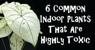 various toxic house plants u2013 coderblvd com