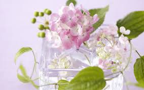 hd images of flowers hd flower gift 10628 flowers gifts festival