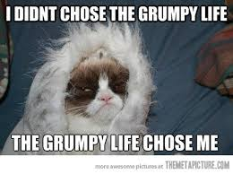 Grumpy Cat Snow Meme - the grumpy life picture comments grumpy cat and captions