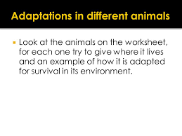 adaptations adaptations for survival adaptations for