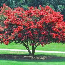 best 25 small shrubs ideas on small flower gardens