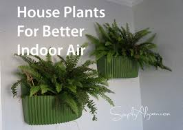 indoor house plants top 5 house plants for improving indoor air quality simply alyson
