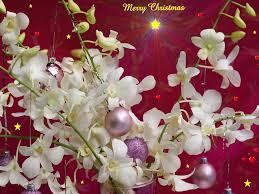 merry christmas desktop wallpaper 2017 grasscloth wallpaper
