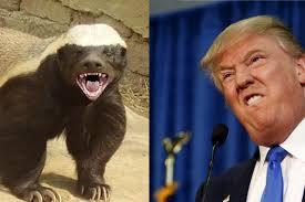 Honey Badger Meme Generator - snarling memes image memes at relatably com