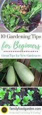 468 best images about gardening tips on pinterest garden care
