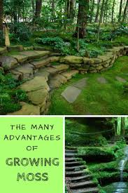 How To Make A Moss Wall by Best 25 Growing Moss Ideas On Pinterest Moss Garden Moss Paint