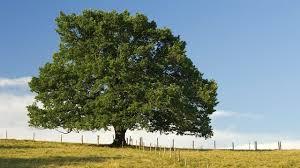 town country tree surgeons ltd 55 font side morpeth ne61 3ps
