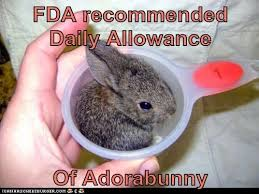 Funny Rabbit Memes - daily allowance funny rabbit meme