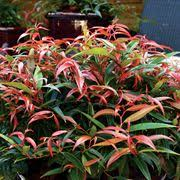 fall color deciduous perennials shrubs trees wayside