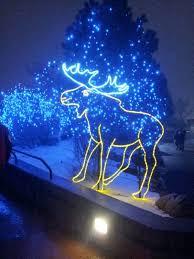 Zoo Lights Phoenix Light Up Christmas With A Trip To The Zoo Petslady Com