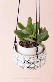 succulent facts what to look for when buying succulents a guide with photos