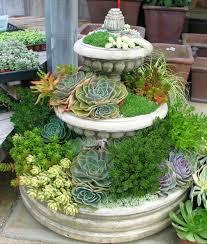 succulent landscape design ideas