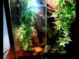 my pet tree frogs review of exo terra terrarium also hear them