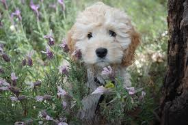 free images white flower puppy animal cute canine looking